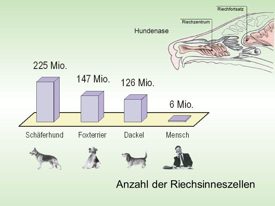 Gaschromatograph Hundenase kontra Gewinnt immer noch die Hundenase !