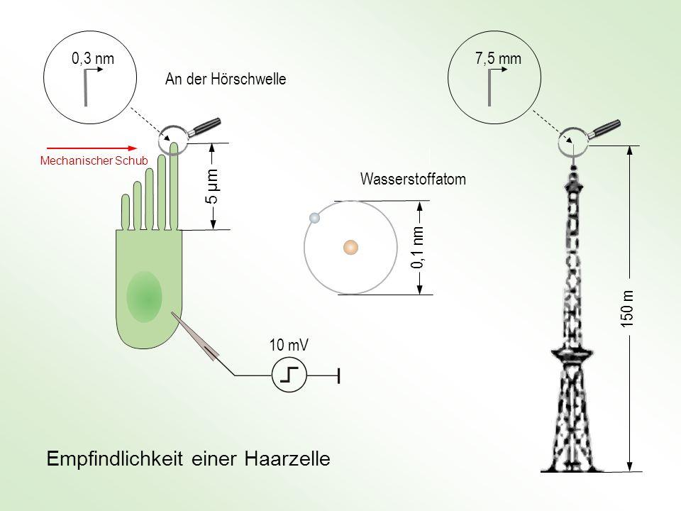 Mensch: Vergleich Auge / Ohr Minimale Reizenergie ≈ 2 · 10 -17 J Minimale Reizenergie ≈ 5 · 10 -18 J Entspricht der Energie von 60 Photonen (550 nm)