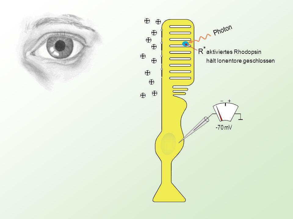 Photon -70 mV -30 mV R