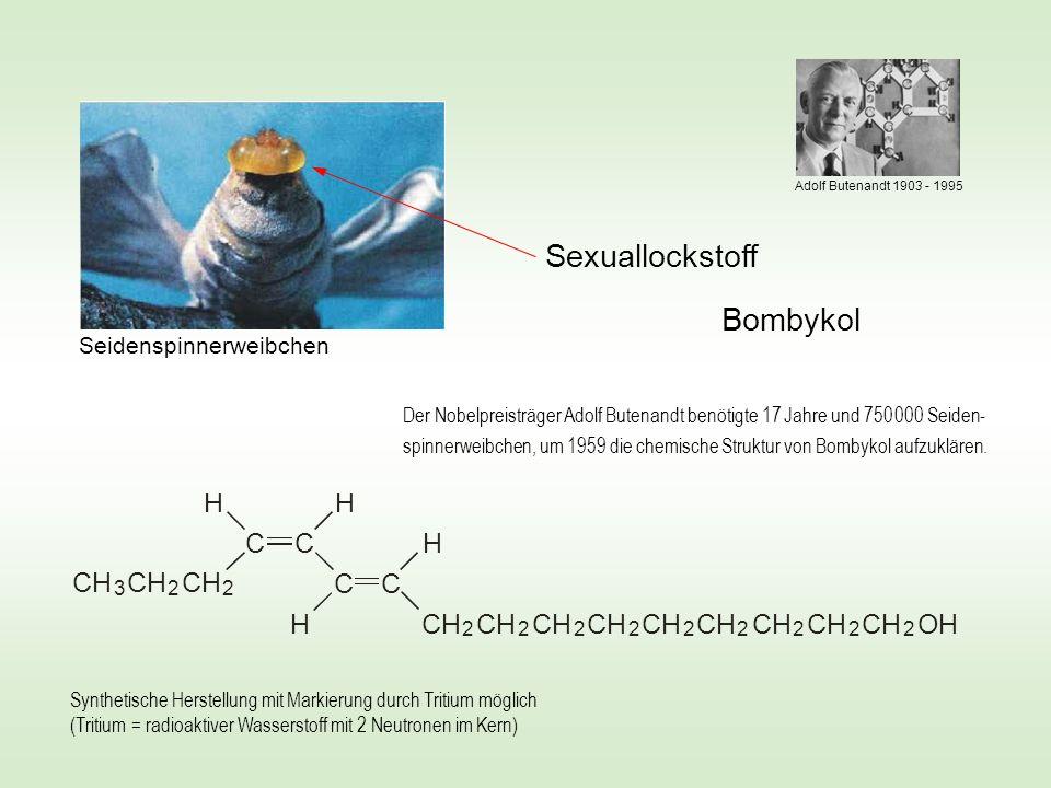 Luftstrom mit Tritium markiertem Bombykol zunehmender Konzentration Schwirr-Reaktion Zahl der absorbier- ten Moleküle über den radioaktiven Zerfall ≈ 300  Gesamtzahl der Rezeptoren = 30 000