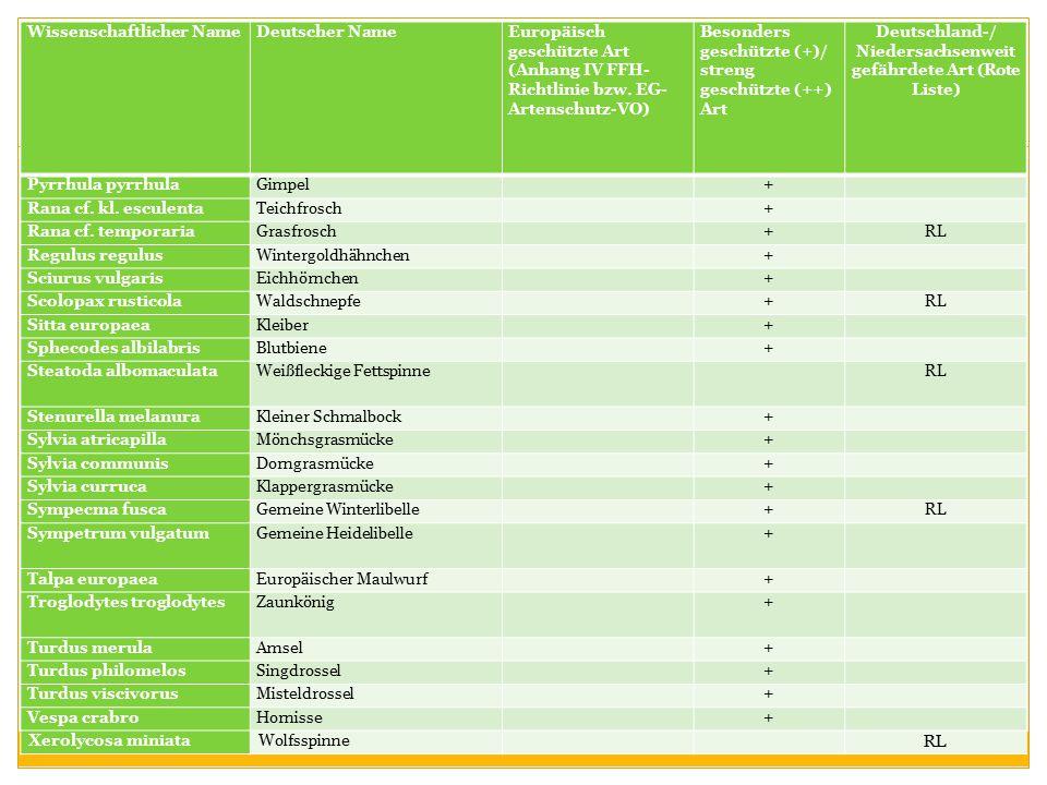 Wissenschaftlicher NameDeutscher NameEuropäisch geschützte Art (Anhang IV FFH- Richtlinie bzw. EG- Artenschutz-VO) Besonders geschützte (+)/ streng ge
