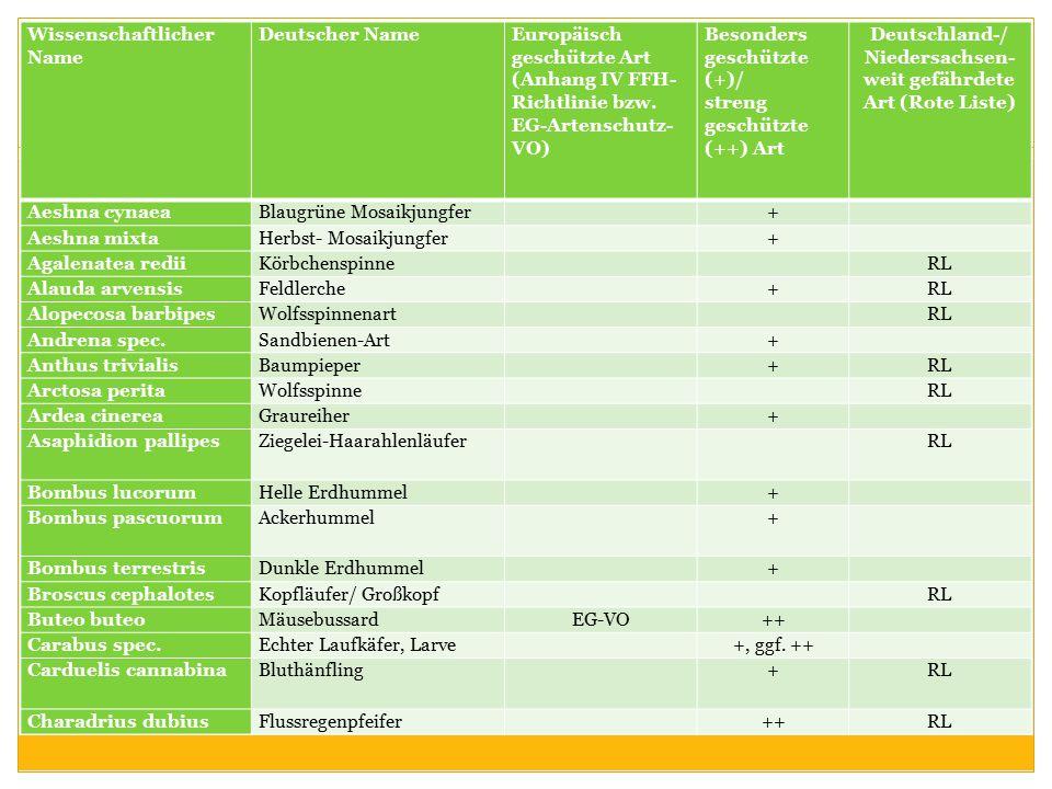 Wissenschaftlicher Name Deutscher NameEuropäisch geschützte Art (Anhang IV FFH- Richtlinie bzw. EG-Artenschutz- VO) Besonders geschützte (+)/ streng g
