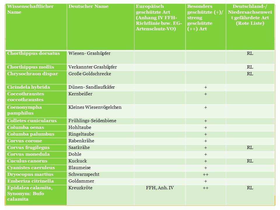 Wissenschaftlicher Name Deutscher NameEuropäisch geschützte Art (Anhang IV FFH- Richtlinie bzw.