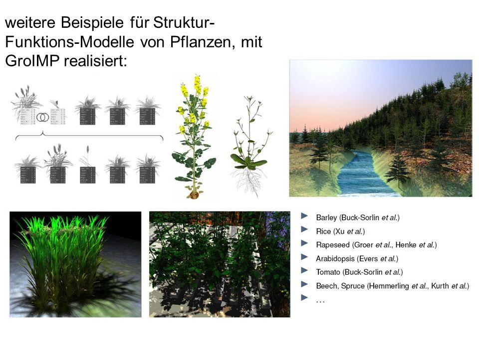 weitere Beispiele für Struktur- Funktions-Modelle von Pflanzen, mit GroIMP realisiert: