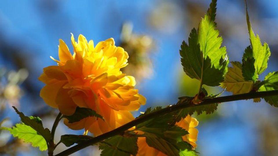 lasst uns dankbar sein, dass wir die schönen Farben genießen können!