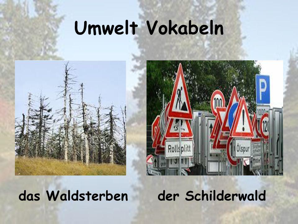 Umwelt Vokabeln der Schilderwalddas Waldsterben