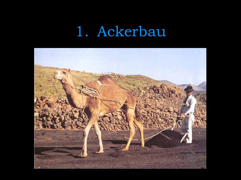 1.Ackerbau