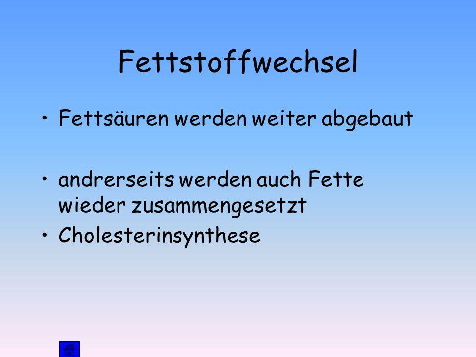 Fettstoffwechsel Fettsäuren werden weiter abgebaut andrerseits werden auch Fette wieder zusammengesetzt Cholesterinsynthese