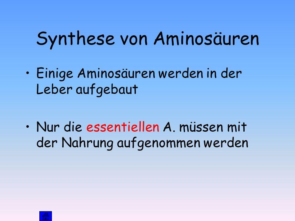 Synthese von Aminosäuren Einige Aminosäuren werden in der Leber aufgebaut Nur die essentiellen A.