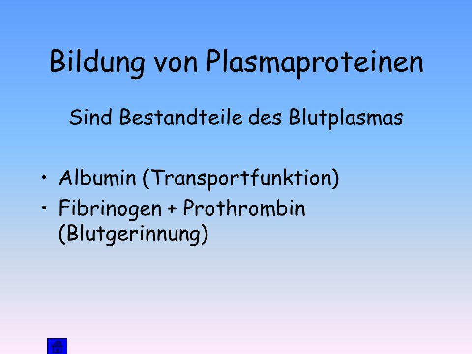 Bildung von Plasmaproteinen Sind Bestandteile des Blutplasmas Albumin (Transportfunktion) Fibrinogen + Prothrombin (Blutgerinnung)
