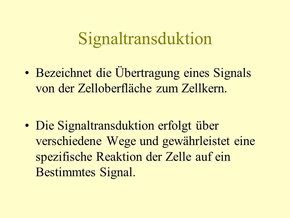 Signaltransduktion Bezeichnet die Übertragung eines Signals von der Zelloberfläche zum Zellkern. Die Signaltransduktion erfolgt über verschiedene Wege