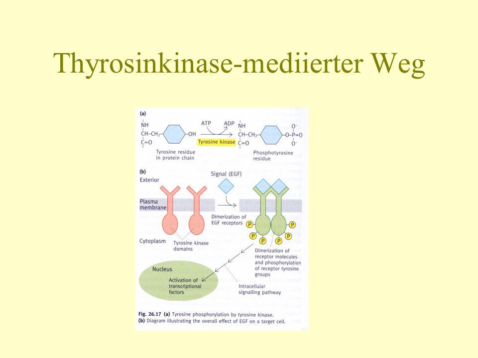 Thyrosinkinase-mediierter Weg