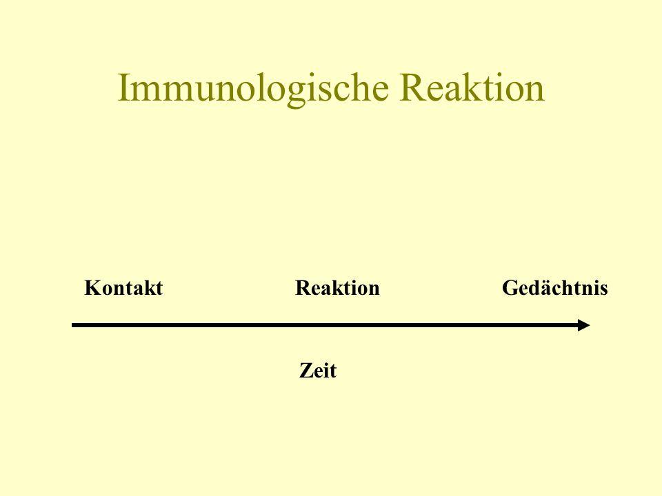 Immunologische Reaktion Kontakt Reaktion Gedächtnis Zeit