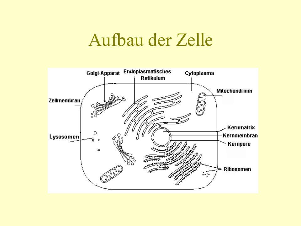 Aufbau der Zelle