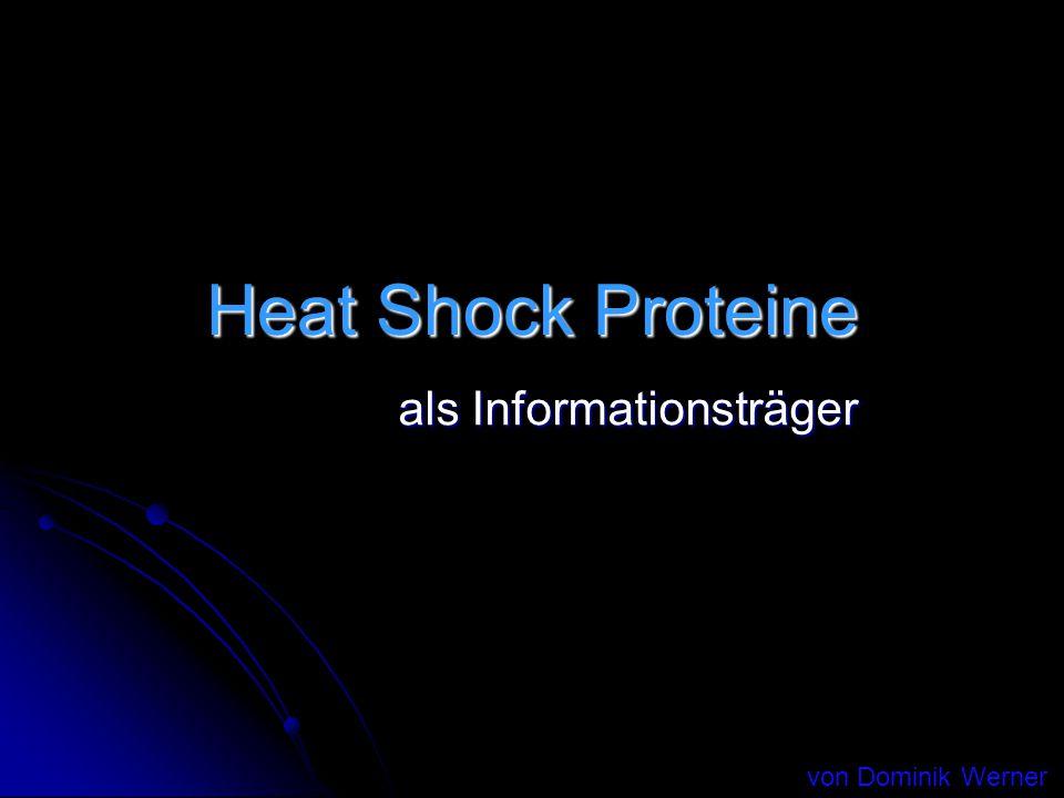 Heat Shock Proteine als Informationsträger von Dominik Werner