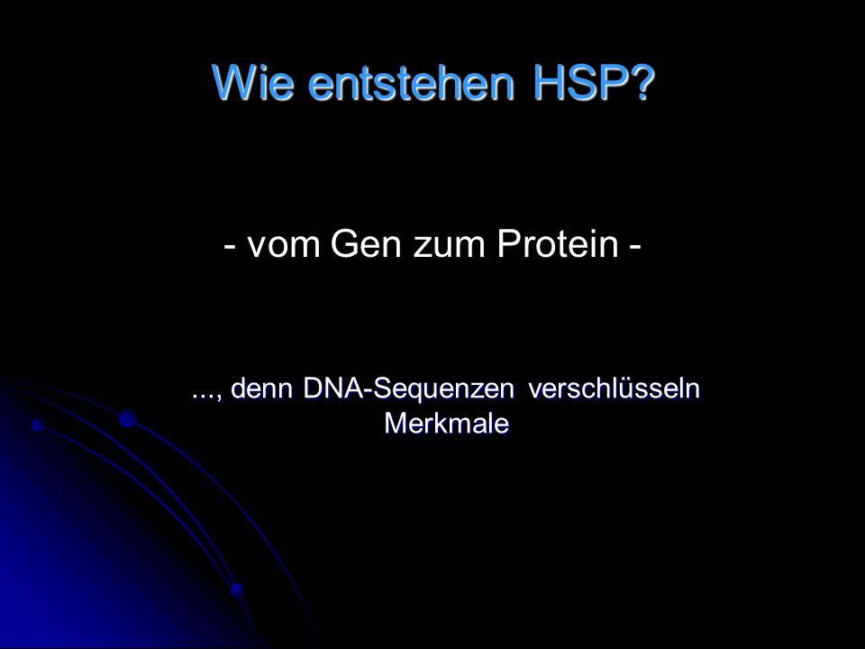 Wie entstehen HSP? - vom Gen zum Protein -..., denn DNA-Sequenzen verschlüsseln Merkmale