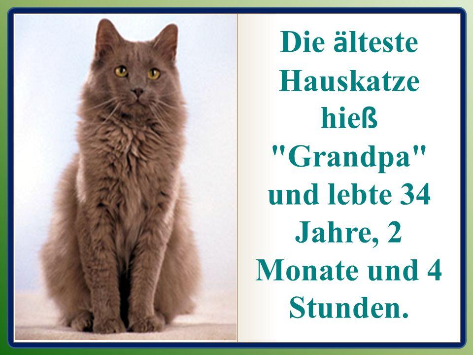 Die ä lteste Hauskatze hie ß Grandpa und lebte 34 Jahre, 2 Monate und 4 Stunden.