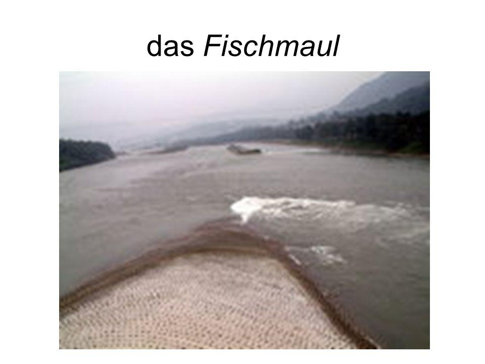 das Fischmaul