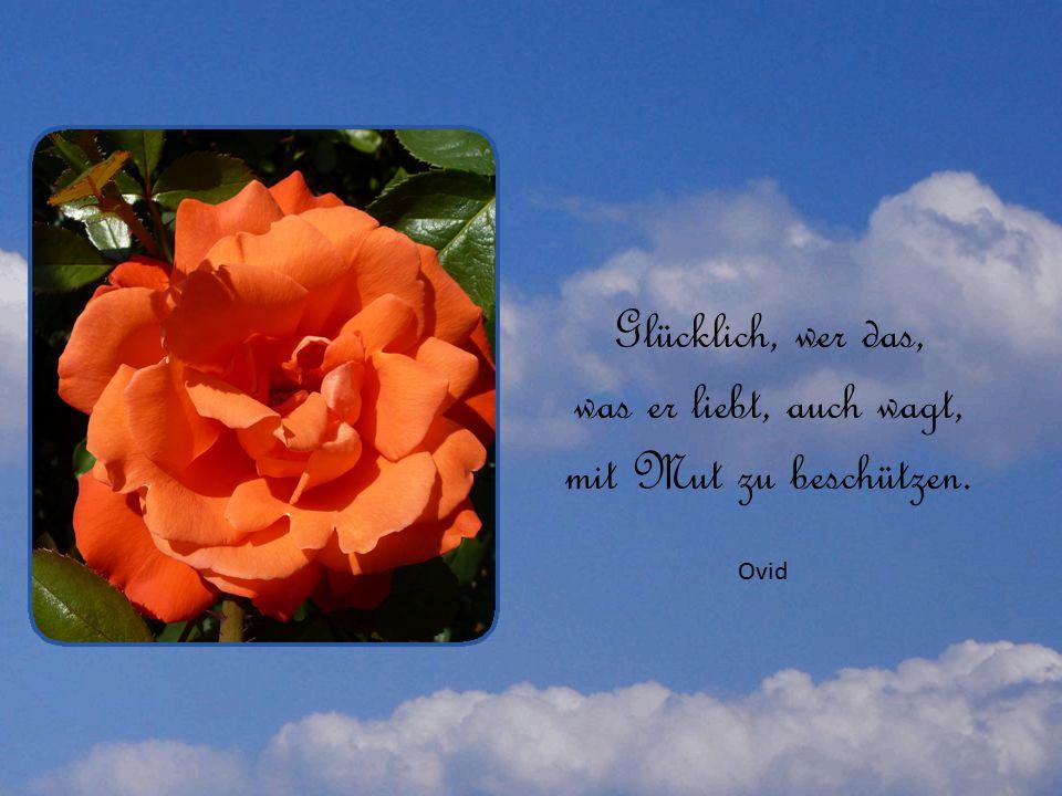 Glücklich, wer das, was er liebt, auch wagt, mit Mut zu beschützen. Ovid