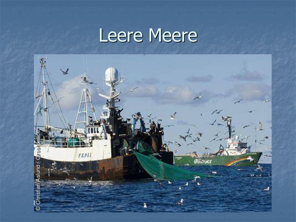 Industrieller Fischfang -große Trawlerflotten -Fangtechnik -riesige Rund und Ringwandnetze -aufbereitung auf See