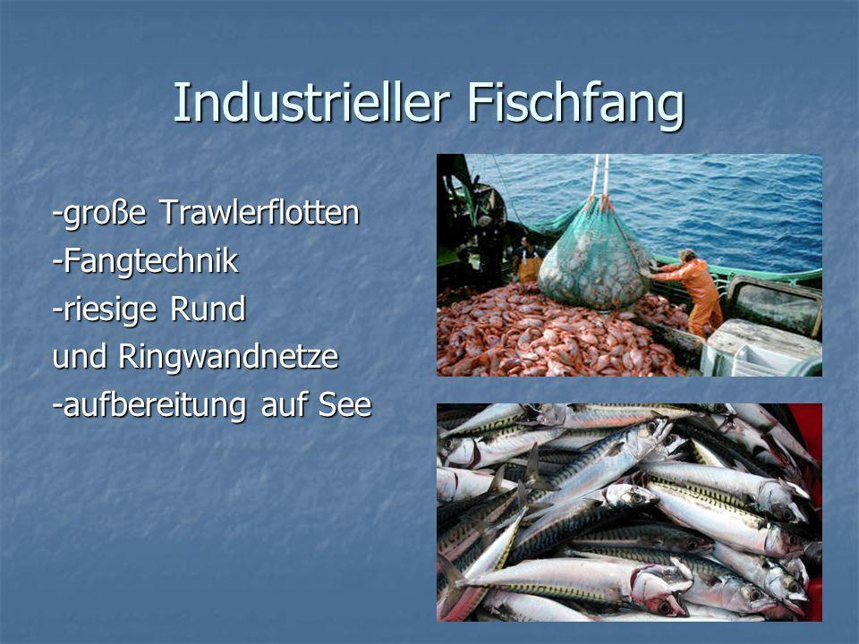 Überfischung -Fischraubbau -illegale Fischerei -riesige Fangnetze -Zu viel Fischerei -merh fischen als es nach kommt