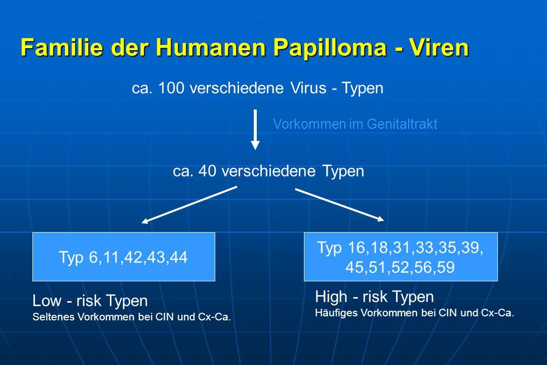 Familie der Humanen Papilloma - Viren ca.