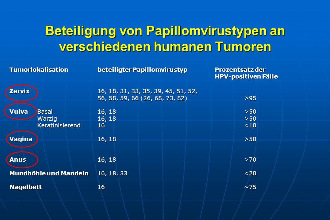 Beteiligung von Papillomvirustypen an verschiedenen humanen Tumoren Tumorlokalisation beteiligter Papillomvirustyp Prozentsatz der HPV-positiven Fälle Zervix 16, 18, 31, 33, 35, 39, 45, 51, 52, 56, 58, 59, 66 (26, 68, 73, 82) >95 Vulva Basal16, 18>50 Warzig16, 18>50 Warzig16, 18>50 Keratinisierend16<10 Keratinisierend16<10 Vagina 16, 18 >50 Anus 16, 18 >70 Mundhöhle und Mandeln16, 18, 33 <20 Nagelbett 16 ~75