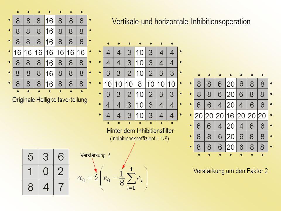 Vertikale und horizontale Inhibitionsoperation Originale Helligkeitsverteilung Hinter dem Inhibitionsfilter Verstärkung um den Faktor 2 (Inhibitionskoeffizient = 1/ 8) Verstärkung 2