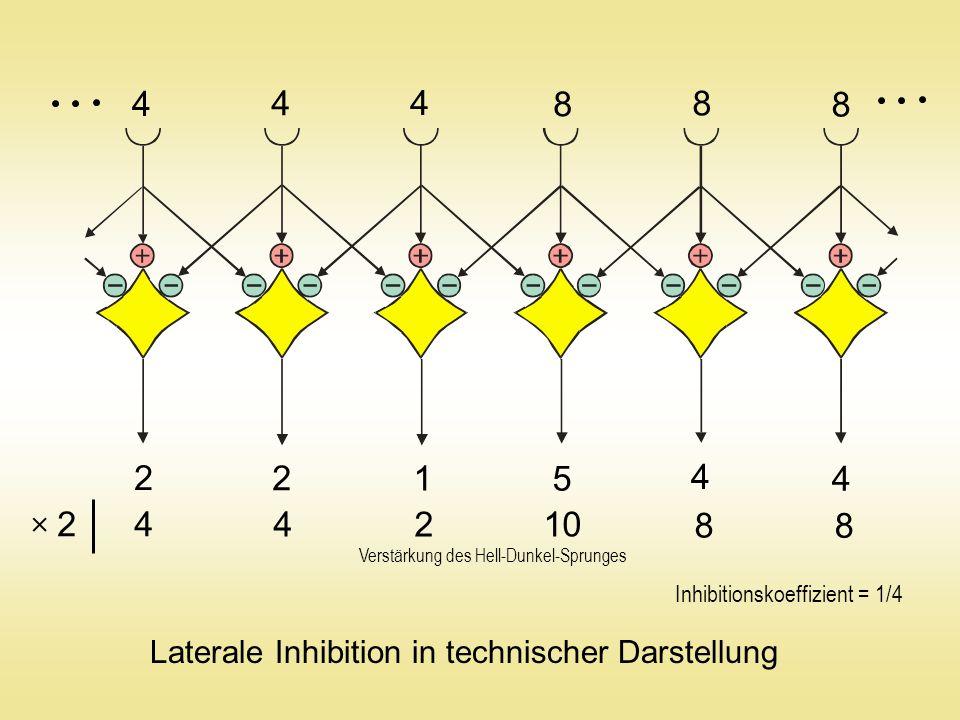 4 4 4 8 8 8 2 2 1 5 4 4 4 4210 8 8 2  Laterale Inhibition in technischer Darstellung Inhibitionskoeffizient = 1/4 Verstärkung des Hell-Dunkel-Sprunges