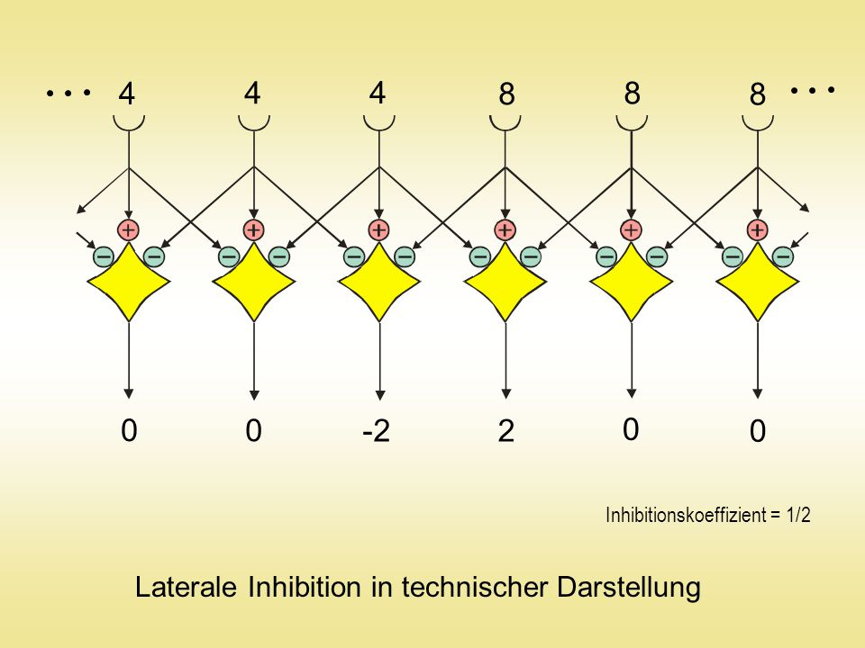 0 0 -2 2 0 0 Laterale Inhibition in technischer Darstellung Inhibitionskoeffizient = 1/2 4 4 4 8 8 8