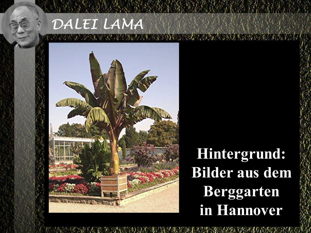 Hintergrund: Bilder aus dem Berggarten in Hannover