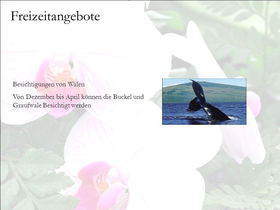 Freizeitangebote Besichtigungen von Walen Von Dezember bis April können die Buckel und Graufwale Besichtigt werden