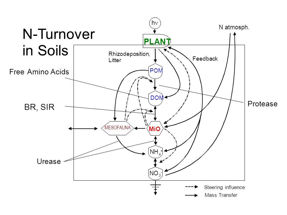 N atmosph. BR, SIR PLANT POM DOM Rhizodeposition, Litter Feedback Mass Transfer Steering influence MESOFAUNA MiO FreeAmino Acids Protease N-Turnover i