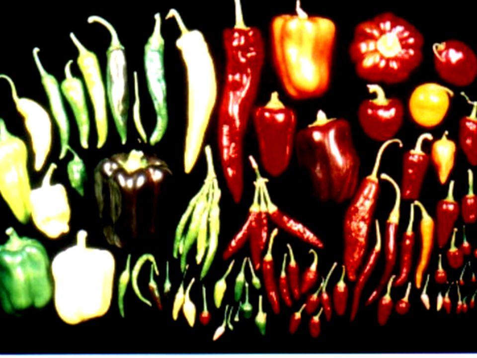 """""""Für gesunde Kinder und was Vernünftiges zu essen. BfN, Insel Vilm 24.07.2001 NABU-Projekt Kulturpflanzenvielfalt Folie 19 Dr."""
