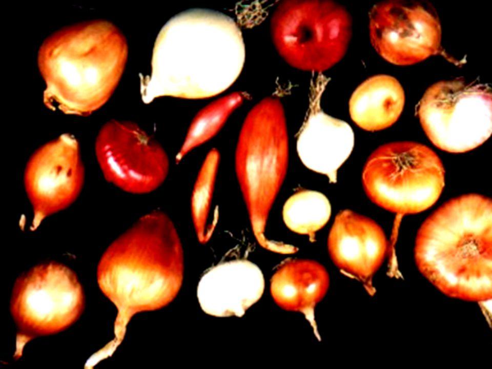 """""""Für gesunde Kinder und was Vernünftiges zu essen. BfN, Insel Vilm 24.07.2001 NABU-Projekt Kulturpflanzenvielfalt Folie 20 Dr."""