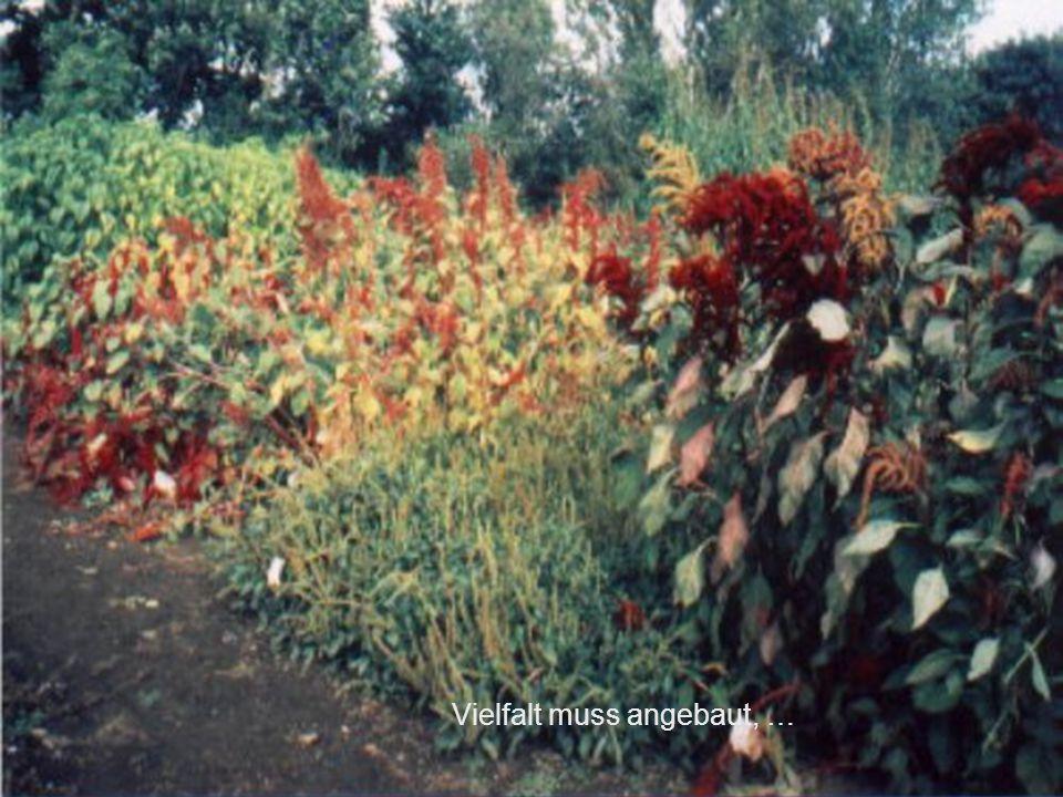 """""""Für gesunde Kinder und was Vernünftiges zu essen."""" BfN, Insel Vilm 24.07.2001 NABU-Projekt Kulturpflanzenvielfalt Folie 24 Dr. G. Eysel, C. Wiethaler"""