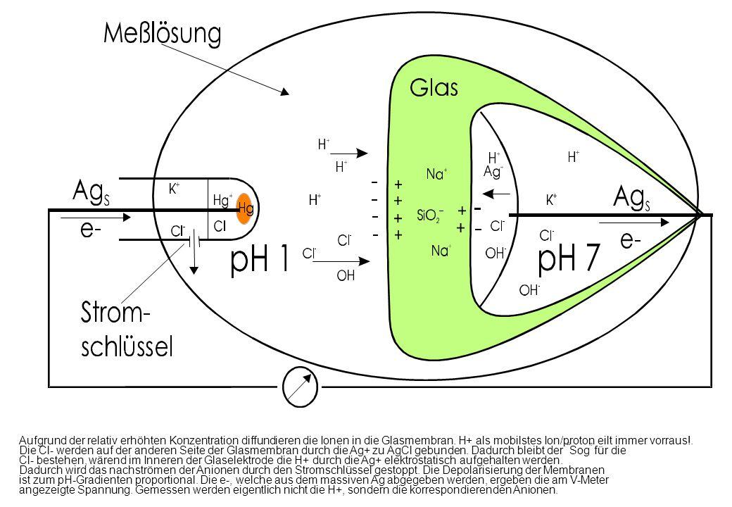 Aufgrund der relativ erhöhten Konzentration diffundieren die Ionen in die Glasmembran. H+ als mobilstes Ion/proton eilt immer vorraus!. Die Cl- werden