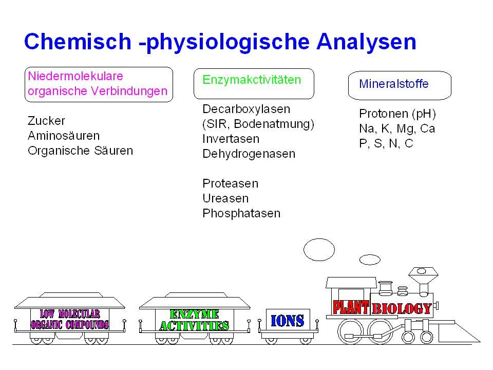 Microhabitate im Boden Lückenraum- system: Wasser Luft Schleime Staunässe (anaerobe Zonen) Rhizosphäre Bodenpartikel (Carbonate)