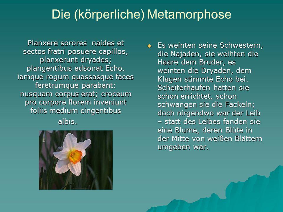 Die (körperliche) Metamorphose Planxere sorores naides et sectos fratri posuere capillos, planxerunt dryades; plangentibus adsonat Echo.