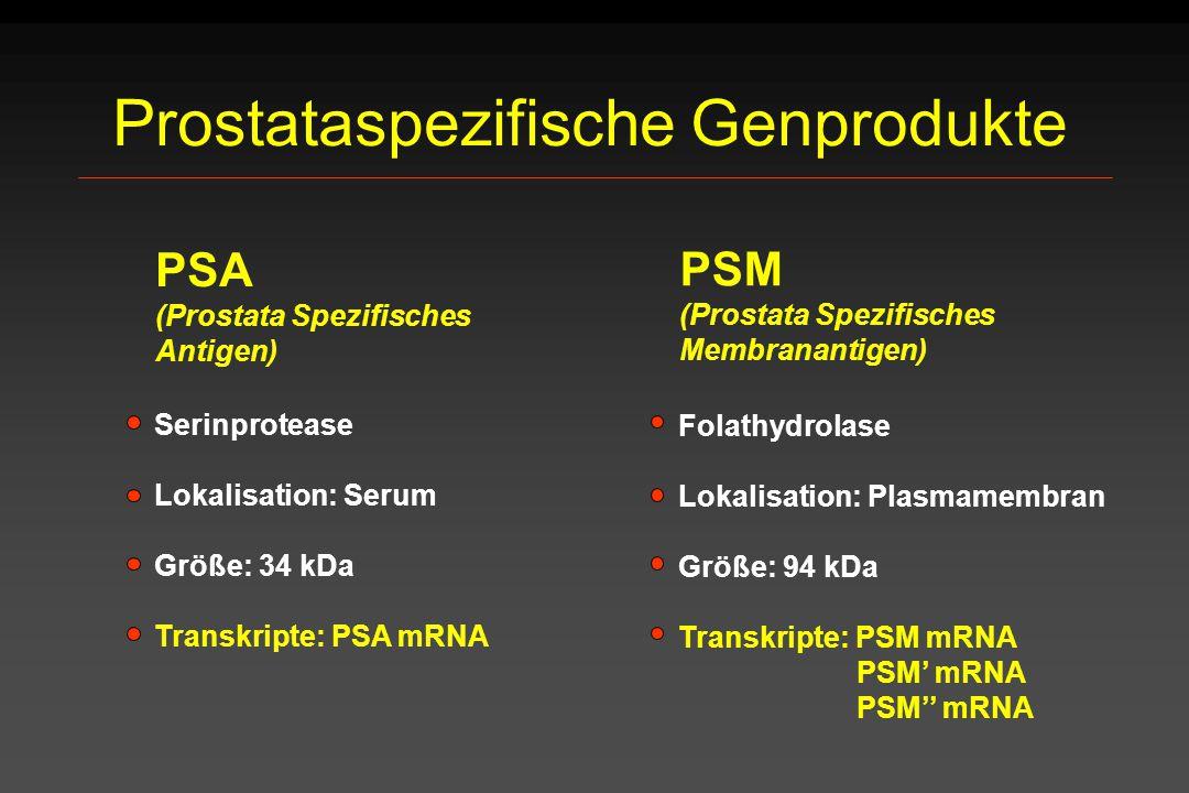 Prostataspezifische Genprodukte PSM (Prostata Spezifisches Membranantigen) PSA (Prostata Spezifisches Antigen) Serinprotease Lokalisation: Serum Größe