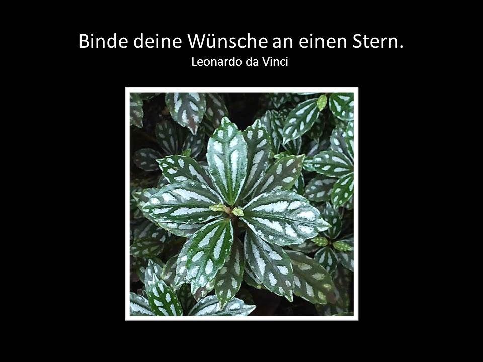 Binde deine Wünsche an einen Stern. Leonardo da Vinci