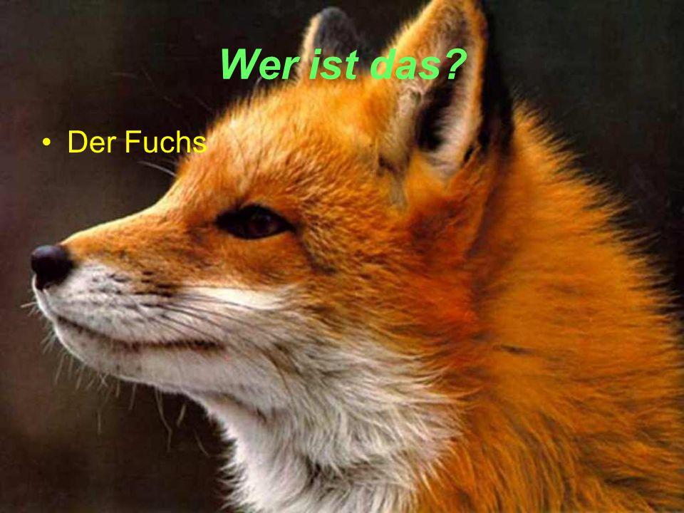 Wer ist das Der Fuchs