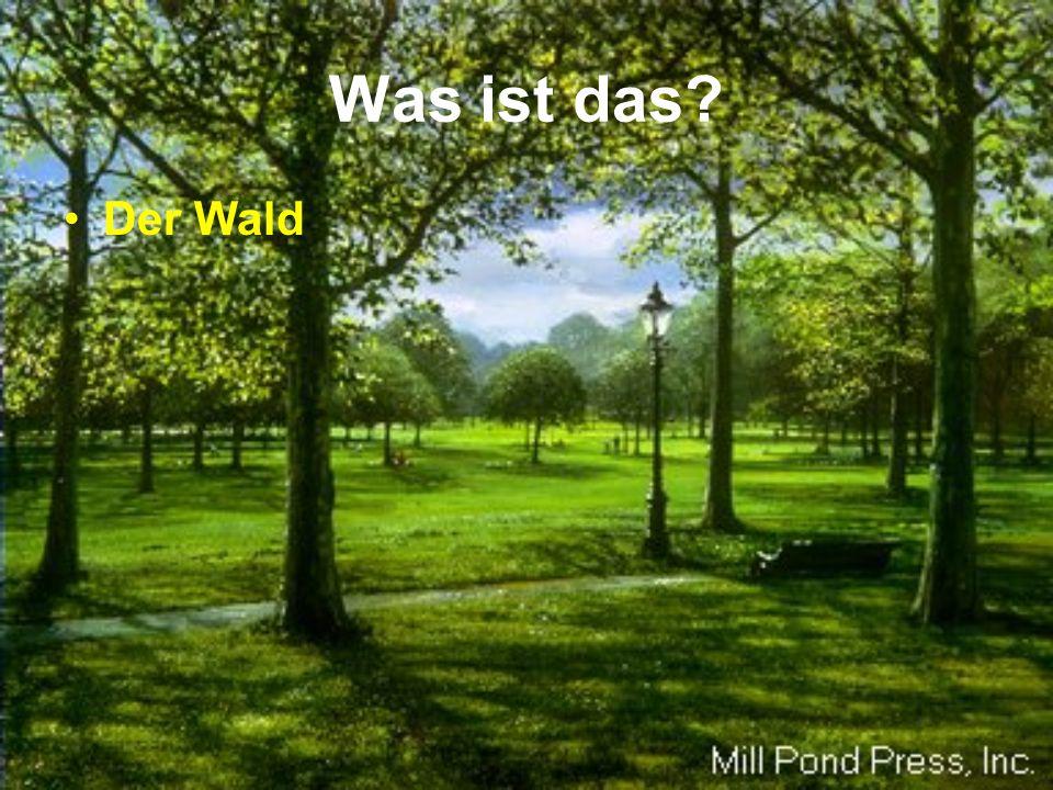 Was ist das Der Wald