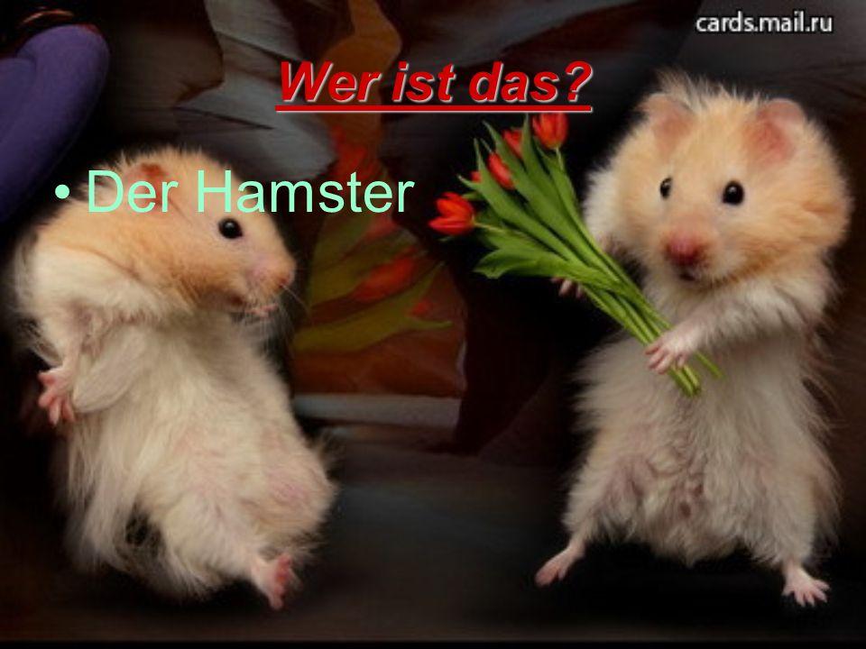 Wer ist das Der Hamster