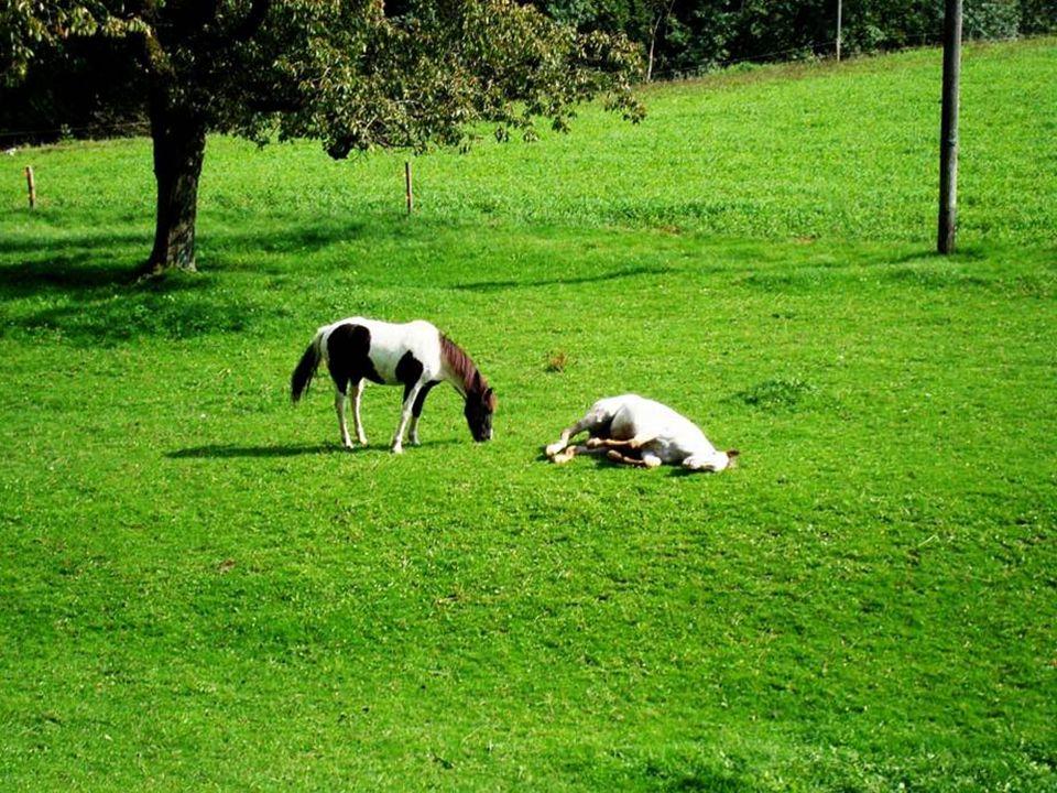 Die Seele des Pferdes äussert sich nur demje- nigen der sie sucht!