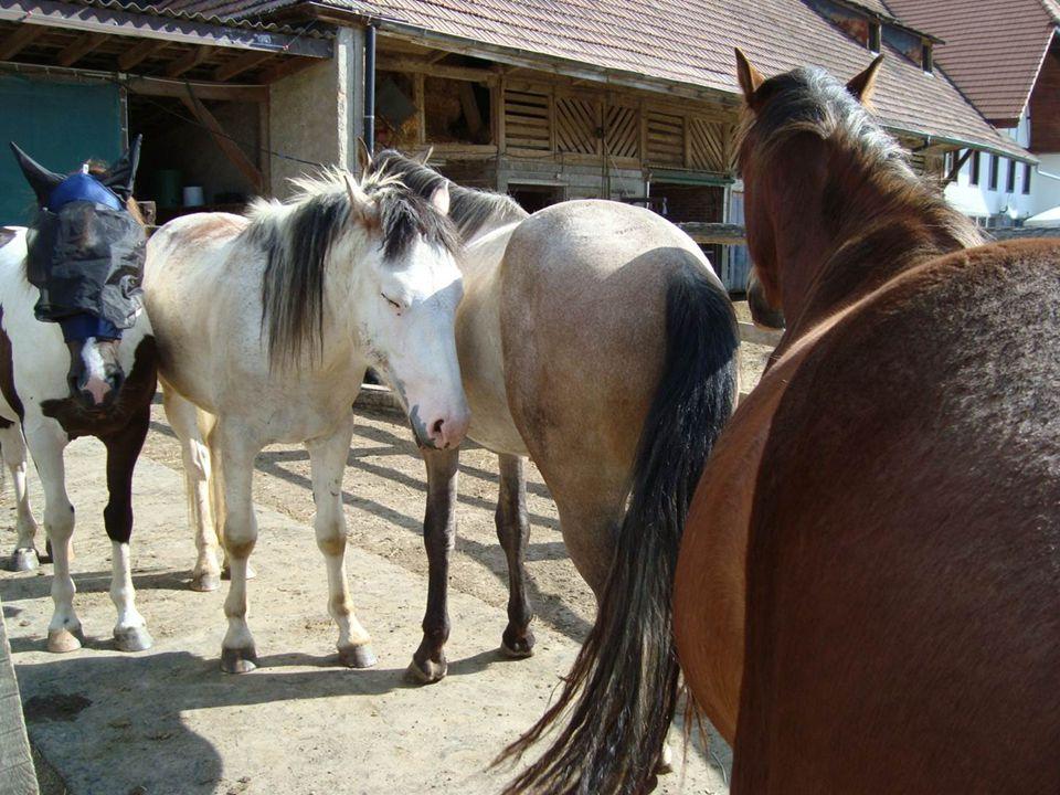Schöner als die Kunst, ist die Natur und durch das Pferd, ist die Natur schöner