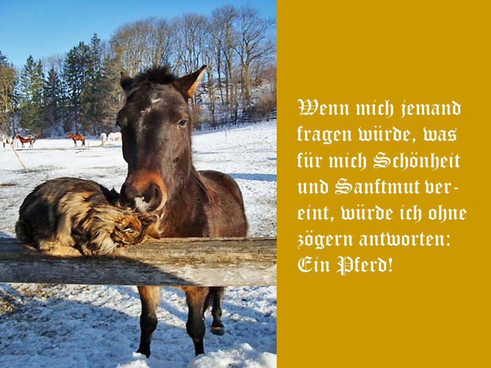 Wenn der Mensch denkt, dass das Pferd nicht fühlt, muss das Pferd fühlen, dass der Mensch nicht denken kann!