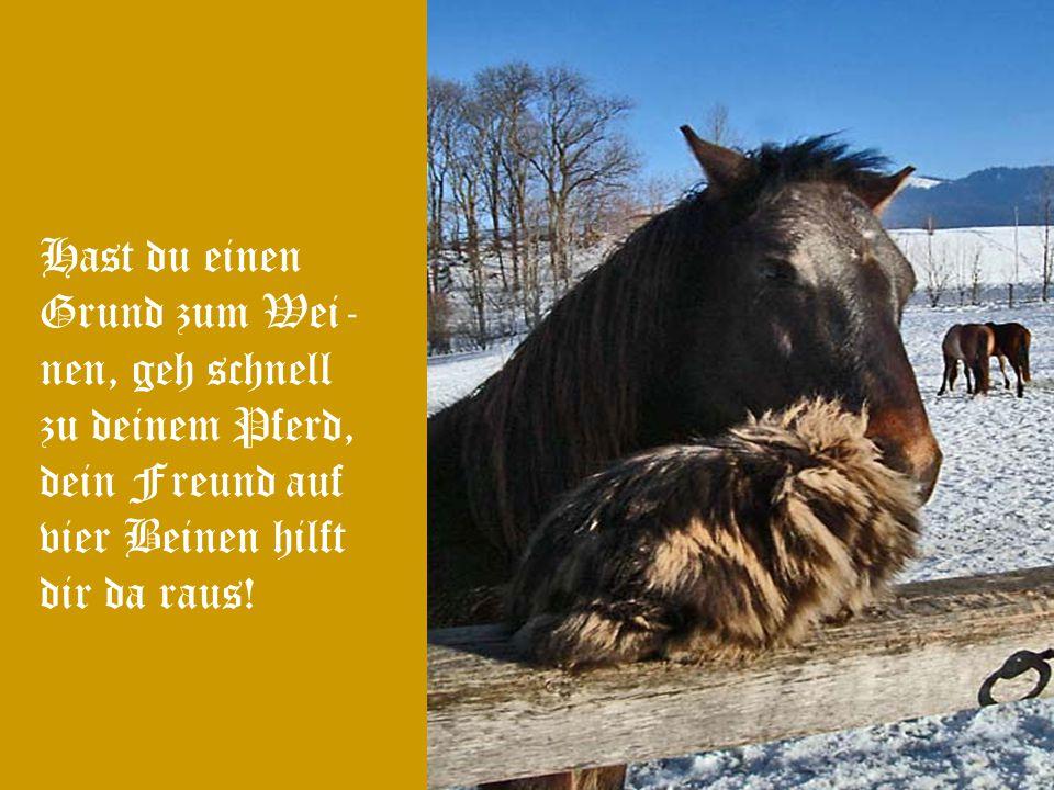 Wenn mich jemand fragen würde, was für mich Schönheit und Sanftmut ver- eint, würde ich ohne zögern antworten: Ein Pferd!