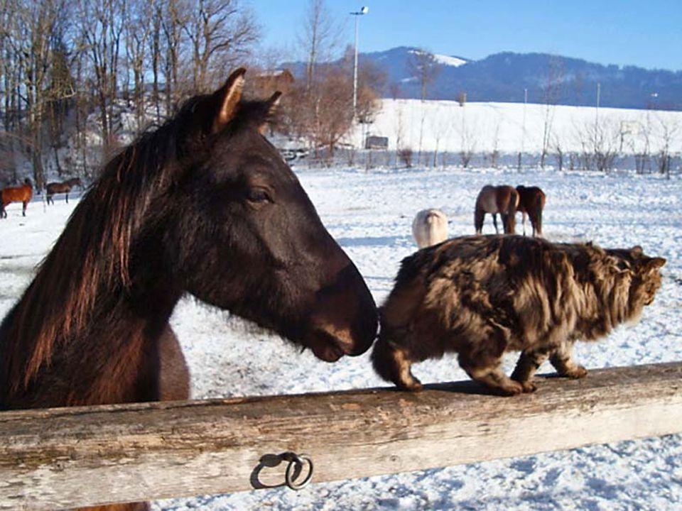 Hast du einen Grund zum Wei- nen, geh schnell zu deinem Pferd, dein Freund auf vier Beinen hilft dir da raus!