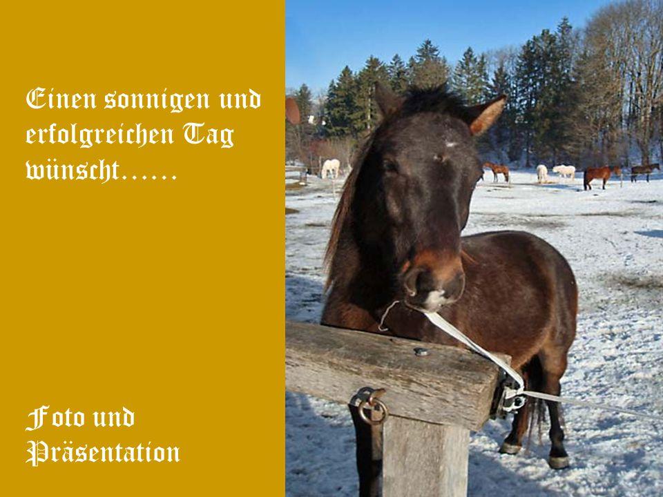 Findest du dein gros- ses Glück ganz wo- anders auf der Erde, denk trotzdem mal an uns Pferde!